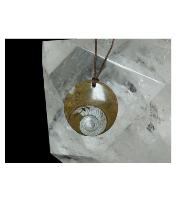 Colgante disco fósil amonite (5ud)