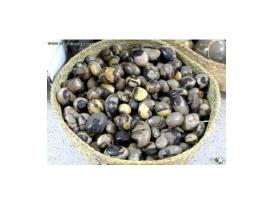 RODADO SEPTAREA GRANDE (1kg)