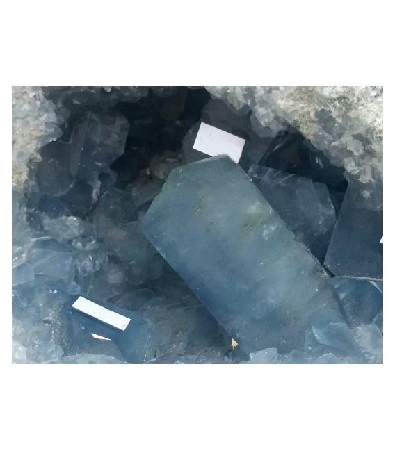 DRUSA CELESTINA GRANDE -14.640kg-/ INTERNET36