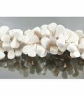 Hilo petalos coral blanco