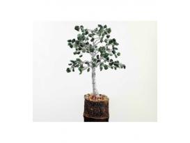 Arbol esmeralda pequeño base madera